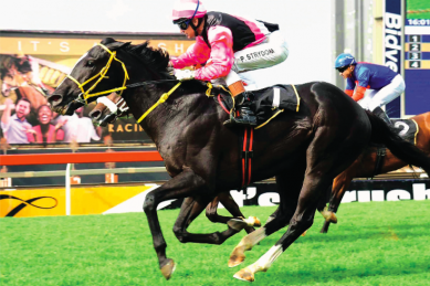 Vote for your Equine Inductees into the South African Hall of Fame