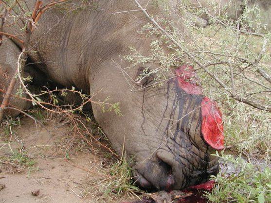 Seven rhinos were found dead in the Hluhluwe-iMfolozi Park