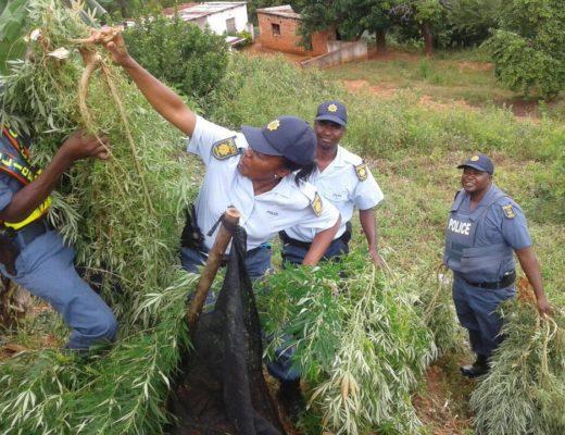 Officers enforcing Operation Fiela II