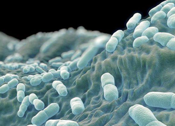 Lab slams 'detrimental' claim that listeria source is unknown