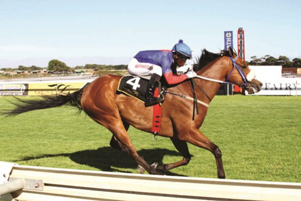 WELL HANDICAPPED. Trip To Heaven carries 61.5kg but is still best weighted runner in Race 5 at Turffontein tonight, a Pinnacle Stakes over 1 000m. Picture: Supplied
