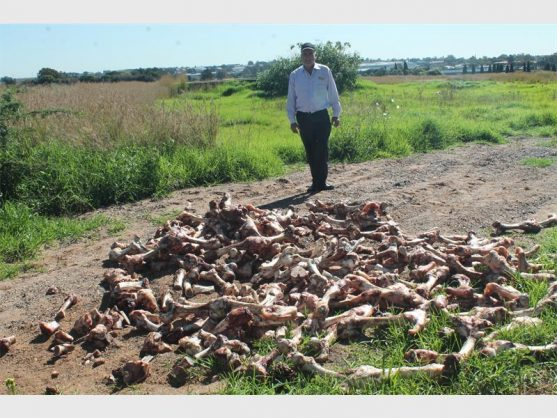 Ward councillor Pieter Henning next to a heap of bones that were illegally dumped in an open space in Pomona.