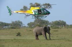 How to test an elephant for TB