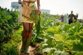 Why so many new black farmers in SA are bound to fail