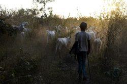 Sixteen killed in Nigeria's Zamfara State as lawlessness continues