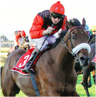FAVOURITE. African Night Sky, winner of last season's Winter Series in Cape Town, has been priced up at 4-1 to take the WSB Greyville 1900 on Saturday 19 May.