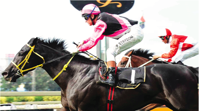 PIERE'S RIDE. Piere Strydom will be aboard joint favourite Surcharge in today's R2-million SA Derby over 2450m at Turffontein. Picture: JC Photographics