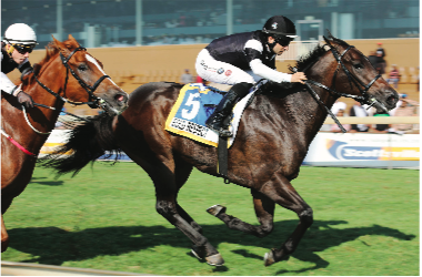 FAVOURITE. Bold Respect tops the boards at 4-1 to win the Grade 1 Tsogo Sun Sprint over 1200m at Scottsville on Saturday. Picture: Gold Circle