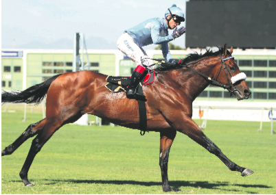 ON TRACK. Legislate is a ''new entry'' on the latest Vodacom Durban July log for the race to be run at Greyville on 7 July and looks set to run in the race he won in 2014.