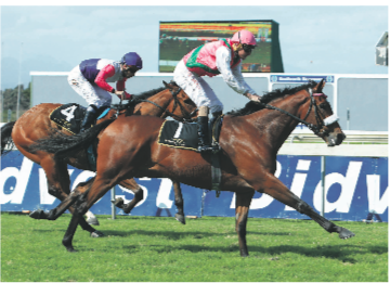 JULY HOPES. Made To Conquer is strongly fancied by the Snaiths to win the Lonsdale Stirrup Cup at Greyville on Saturday and an impressive victory will see him supplemented into the Vodacom Durban July.