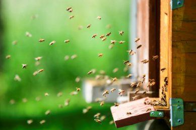 Notre Dame's bees survive devastating inferno