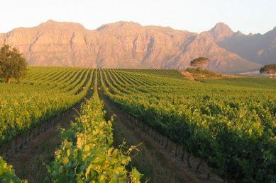 Kleine Zalze wines go from cellar to stellar