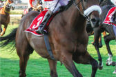 African Night Sky now 18-10 for Durban July