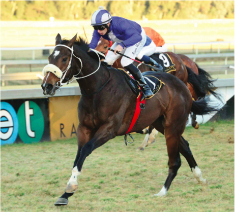 WINWARD HO. Sail For Joy could bring a smile to new trainer Fabian Habib's face tomorrow by winning Race 7 at the Vaal, a MR 80 Handicap over 1400m. The win would be Habib's third in his career as a trainer.