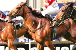 Form makes Gambado a hard horse to beat