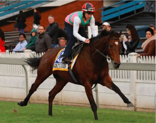 EASY GALLOP. Made To Conquer, with big-race jockey Jeff Lloyd in the irons, is not put under too much pressure during yesterday's public gallops for the R4.25-million Vodacom Durban July at Greyville on Saturday 7 July. See Page 8. Picture: Candiese Marnewick