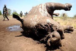 Kruger Park field rangers implicated in rhino poaching granted R10k bail each