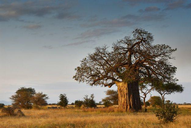 An ancient giant. Shutterstock