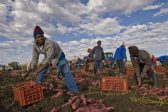 Black farmers' empowerment needs government support