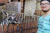 Zoo denies exhibiting 'fake zebras'