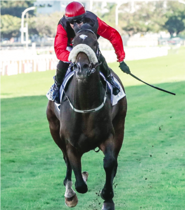 IN FORM. It's My Turn has started to reproduce his three-year-old form and has to be a major contender in the R1.25-million eLan Gold Cup over 3200m at Greyville on Saturday 28 July. Picture: Liesl King