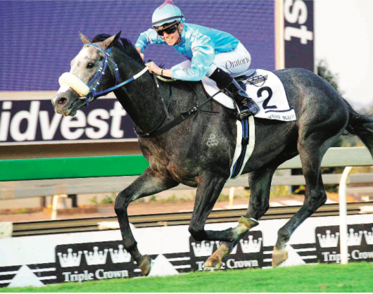 COMEBACK. Heavenly Blue will be having his first run since January in Race 2 at Turffontein tomorrow and could go on to contest the Grade 1 Champions Cup over 1800m at Greyville on 28 July.