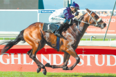 Fayd'Herbe might pay to follow at Durbanville