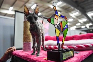 PICS: All the adorable cuteness of this year World of Dogs & Cats expo