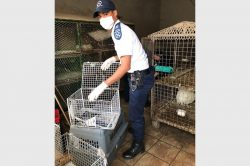 Chickens, goose rescued from horrendous conditions in Benoni