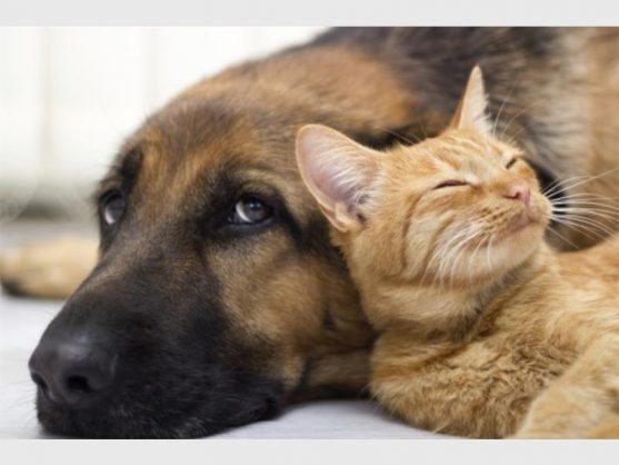 City of Joburg to amend bylaws for dogs and cats – The Citizen