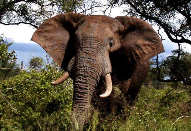 Elephant. Picture: Lowvelder