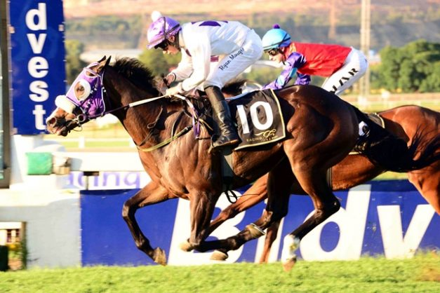 GOOD VALUE. Quattro, who runs in Race 4 at Turffontein today, is Piere Strydom's value bet for the meeting. Picture: JC Photographics