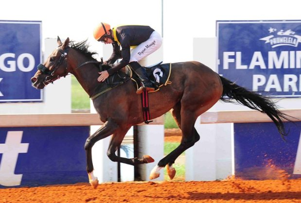 PIERE'S PICK. Piere Strydom has selected Roquebrune to win the Betting World Sprint over 1000m at Flamingo Park today. Picture: JC Photographics