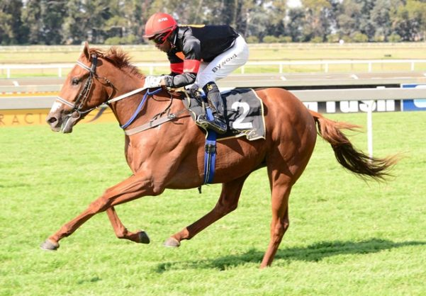 HARD TO BEAT. Bien Venue will be hard to beat in Race 5 at the Vaal today. Picture: Supplied