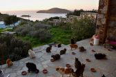 You can get paid to cuddle cats on a Greek island