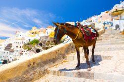 Greek island to protect donkeys