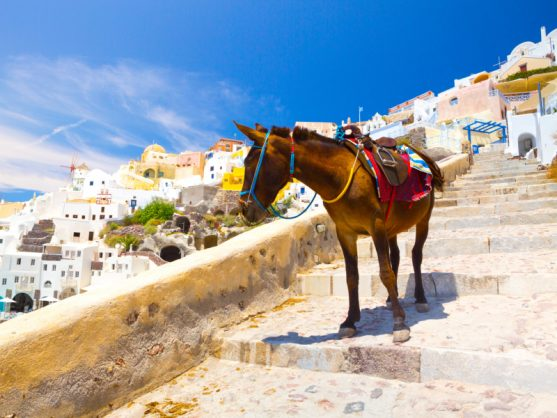 Greek island to protect donkeys