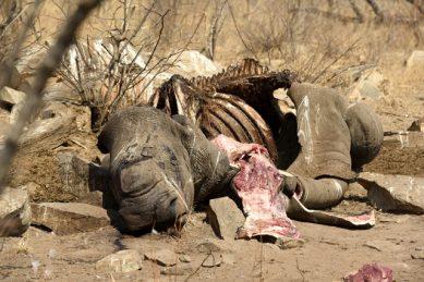 KNP anti-poaching unit's morale drops over lax sentences