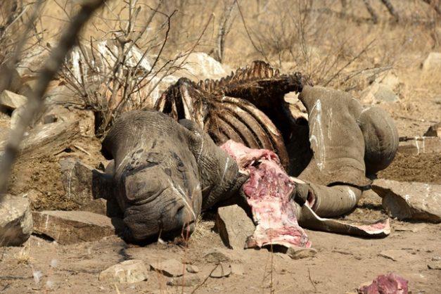 Mozambique sentences two rhino poachers for their wildlife crimes in SA