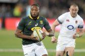 Five Springboks to keep an eye on