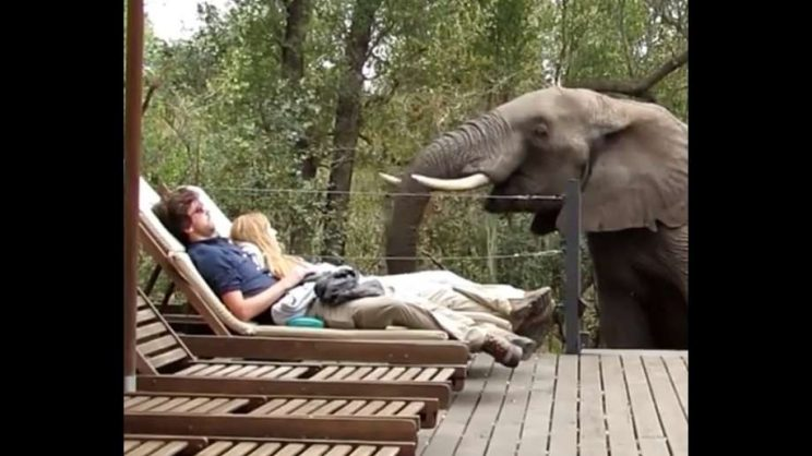WATCH: Elephants surprise sunbathing couple by joining them at the pool