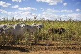 African farmers' association welcomes decision on land expropriation