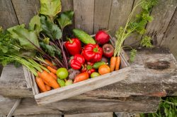 Get ready for a second wave of summer veggies