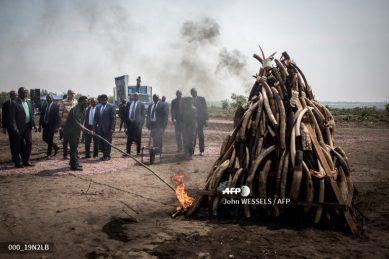 DRC president Joseph Kabila torches ivory stockpile