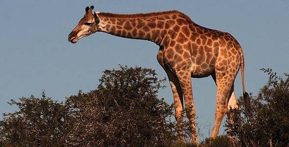 Image: Kruger National Park