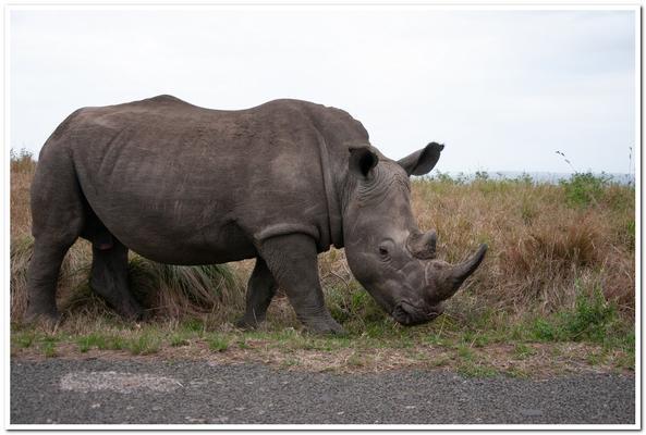 Sex, gambling, bribery in KZN courts see Rhino poachers get off – report