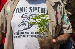 Parliament to decide on how to deal with dagga judgment