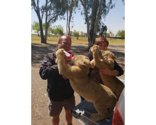 George and Vanessa van Niekerk with the two recovered lion cubs.