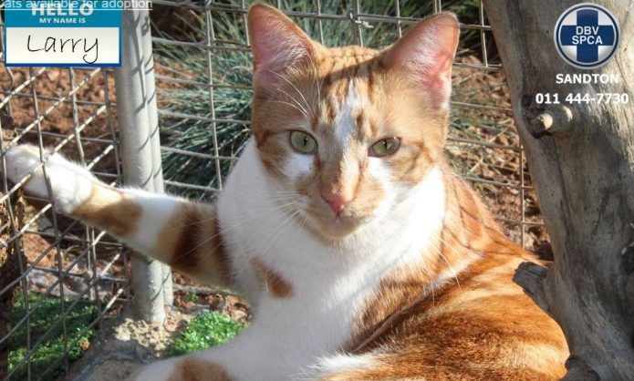 Distinguished cats and dogs up for adoption