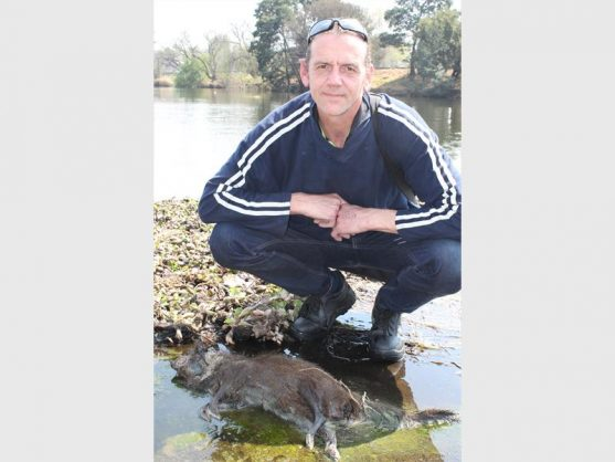 Vernon Aliferis of Rynfield didn't know what animal this was when he discovered it on the overflow at Middle Lake, and said he was concerned pollution could be the cause of its death.